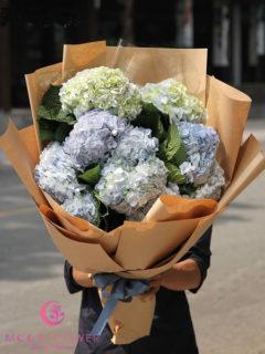 bó hoa chúc mừng hoa cẩm tú cầu