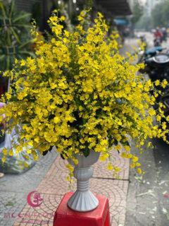 Bình hoa lan vũ nữ đẹp - Hạnh phúc viên mãn