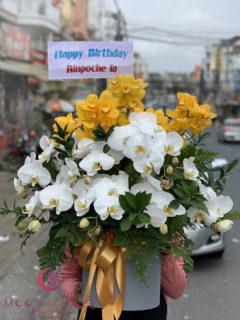 Giỏ hoa địa lan - Phú Quý